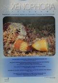 Xenophora Taxonomy 2 ゼノホラ・タクソノミー 2