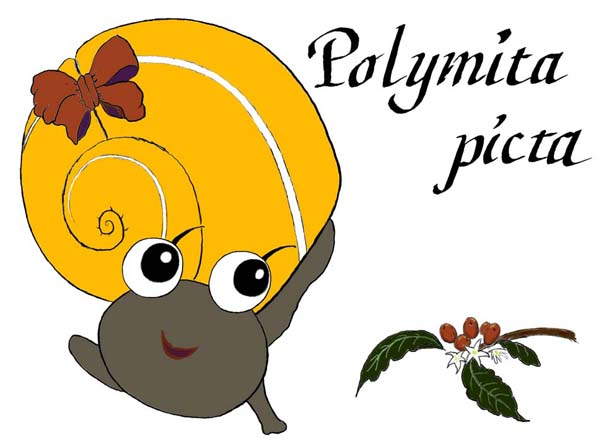 Polymita picta